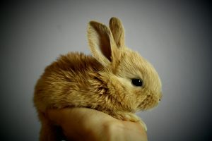 All Things 7 - List of cruelty free comoanies